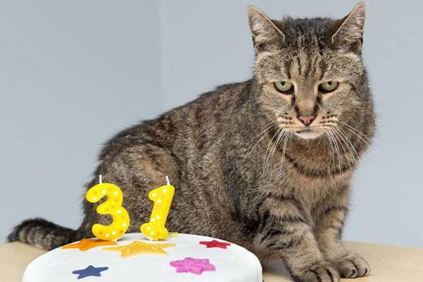 Photo of CURIOSIDADE: Mais velho do munto gato morre com 32 anos de vida
